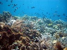 Onder water bij Wakatobi.