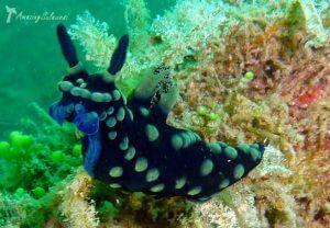 Onderwaterwereld bij Lembeh.
